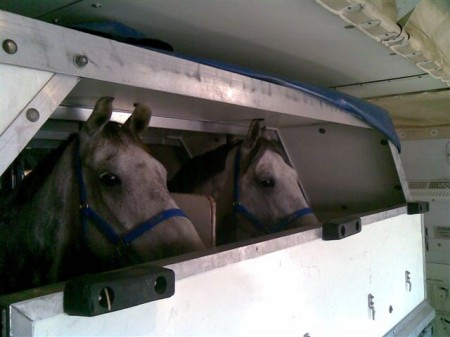 AirFreight_2horses