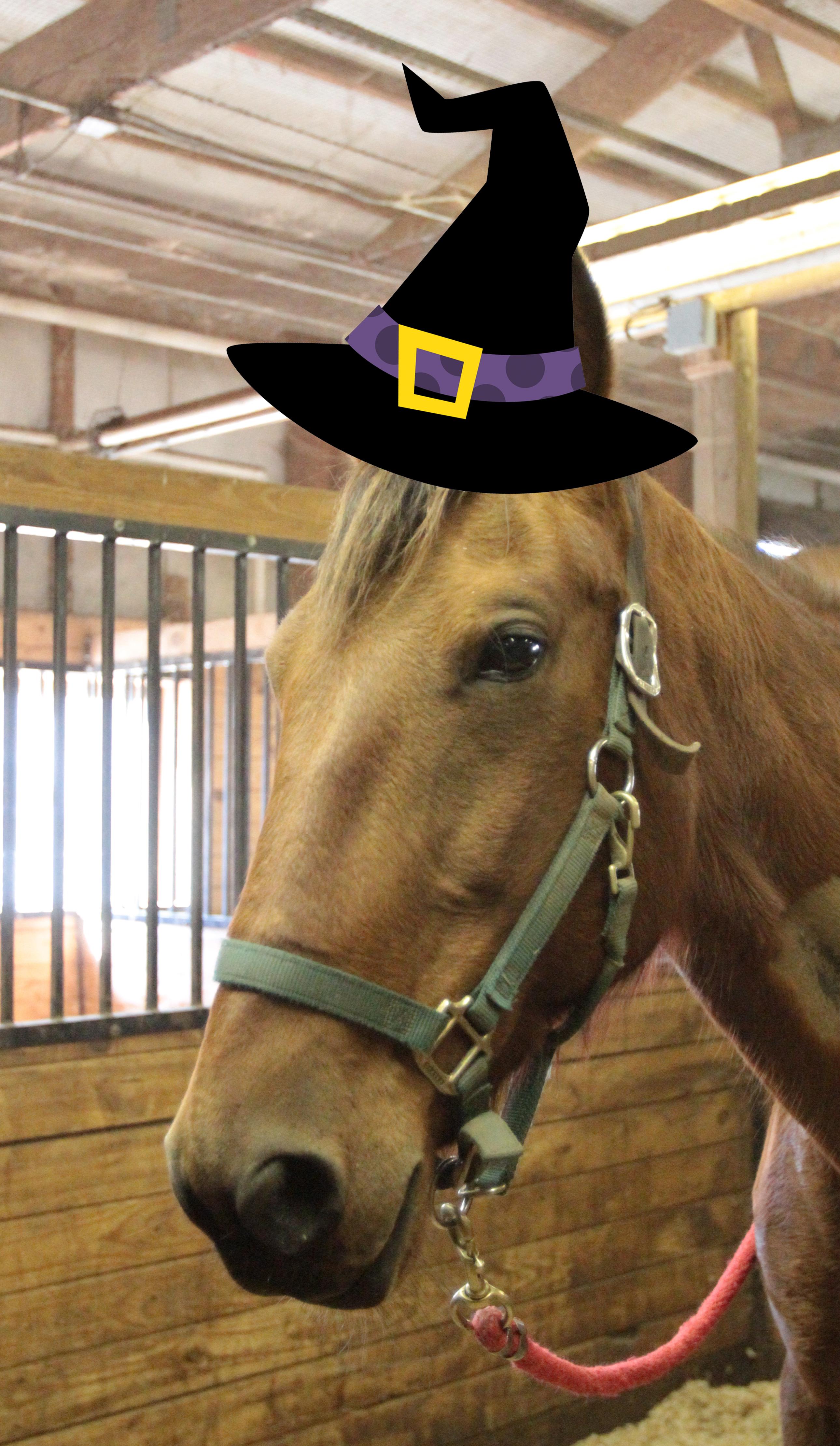 Halloween horse