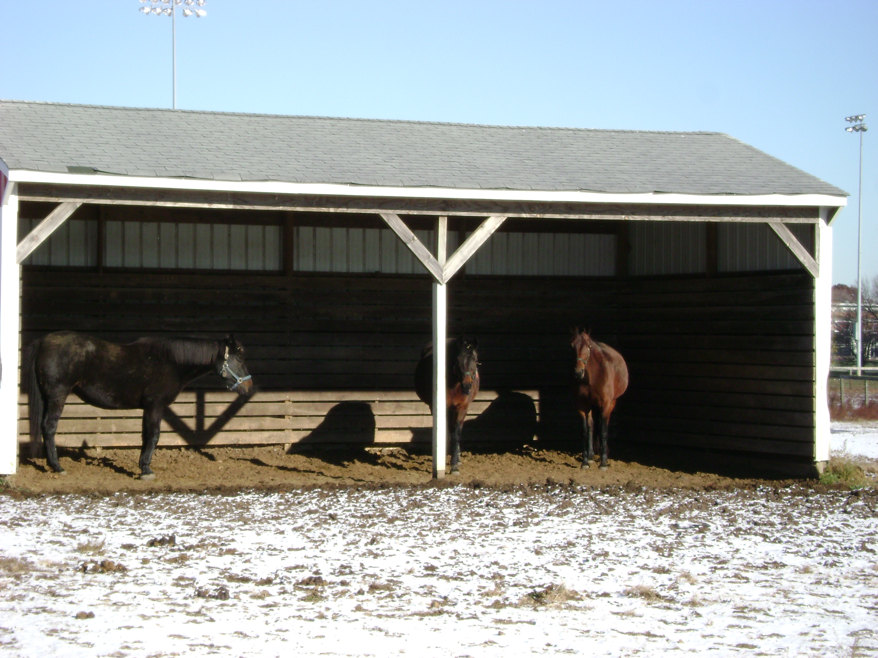 Outside Or In Equine Science Center