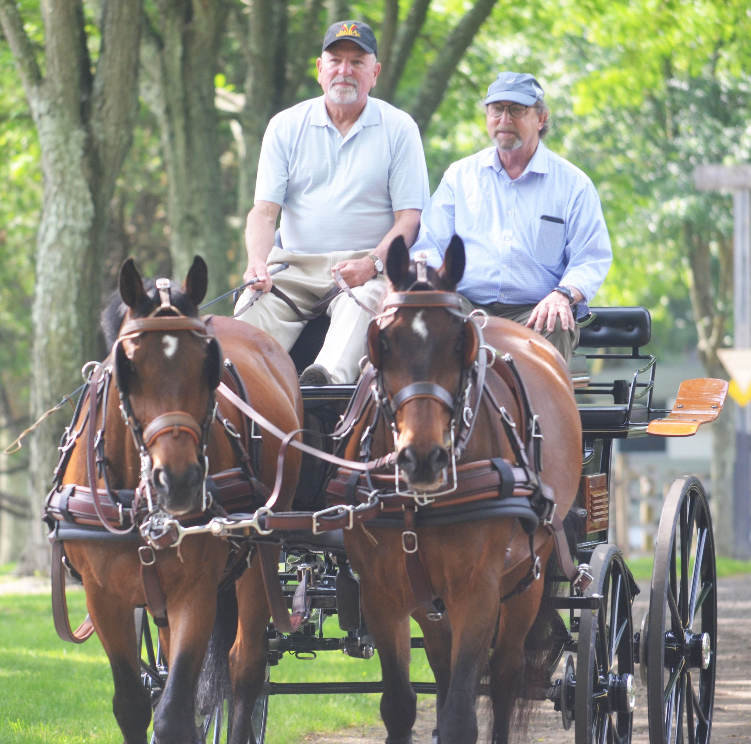 Chet Halka, pictured left, driving Secretary Fisher in one of the carriages Chet uses in the Combined Driving Competitions.